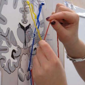 axon tracts in spinal chord string art