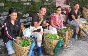 Image of women taking a break from work on a tea planation in Darjeeling