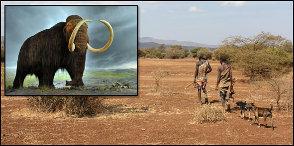 Image of a woolly mammoth, a species possibly hunted to extinction in North America