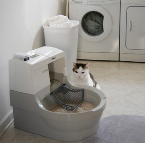 Cat peeing a lot in litter box