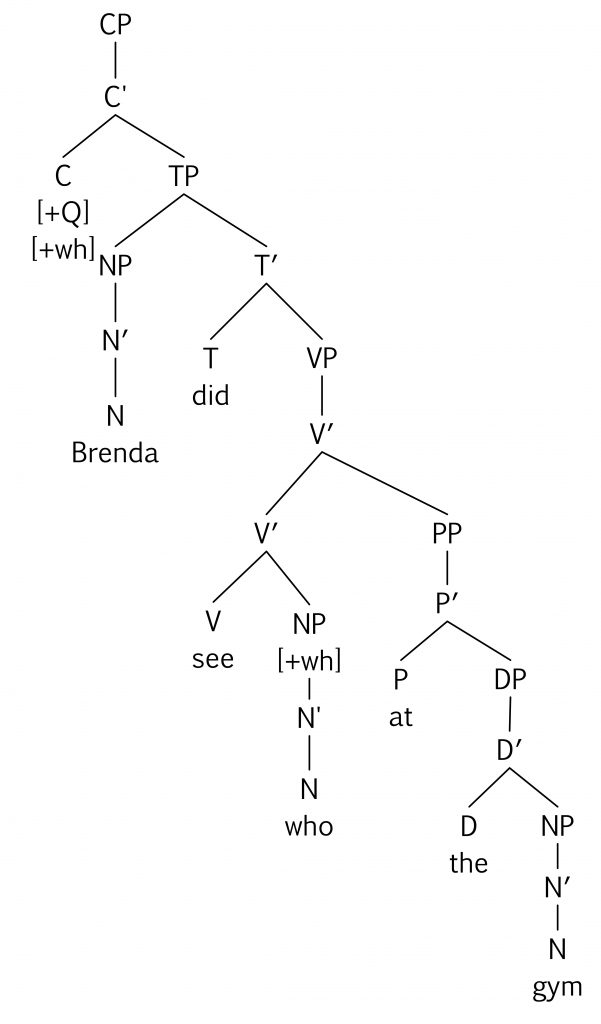 Keys essentials of linguistics which tree diagram correctly represents the deep structure for the question who did brenda see at the gym ccuart Gallery